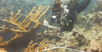 Conserving the Coral Reef Ecosystems Surrounding Little Cayman